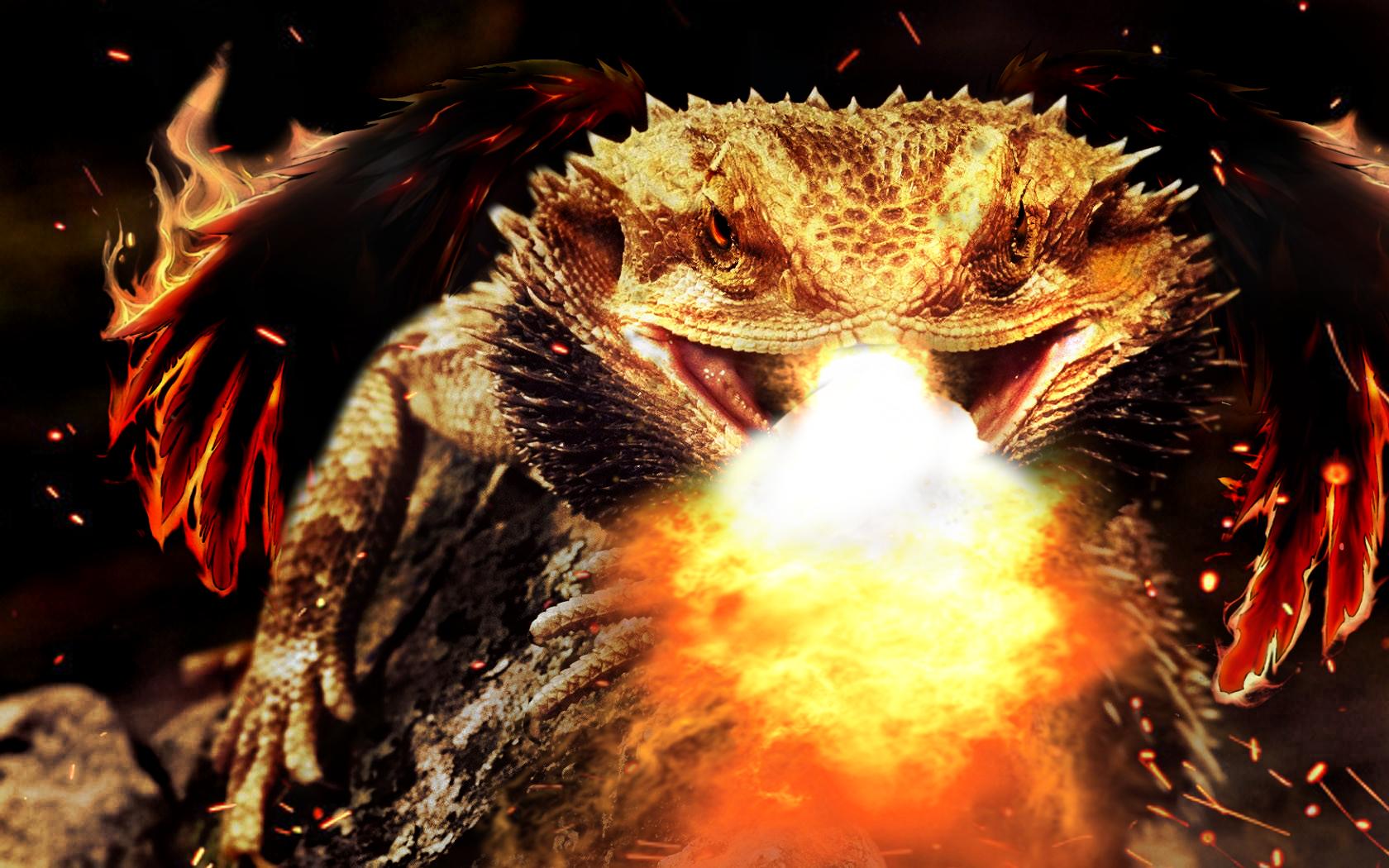 firebreathing bearded dragon