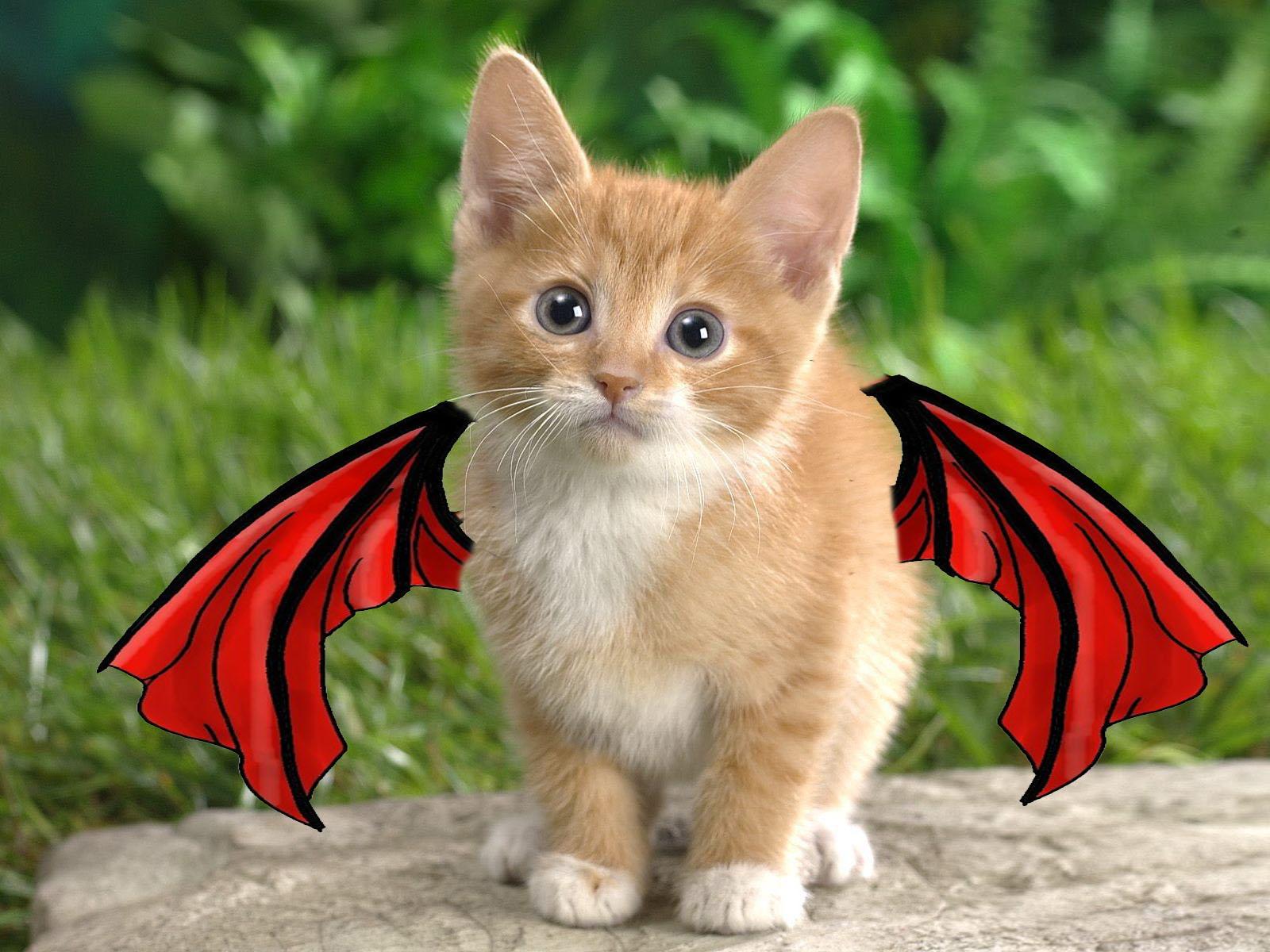 kitten with devil wings