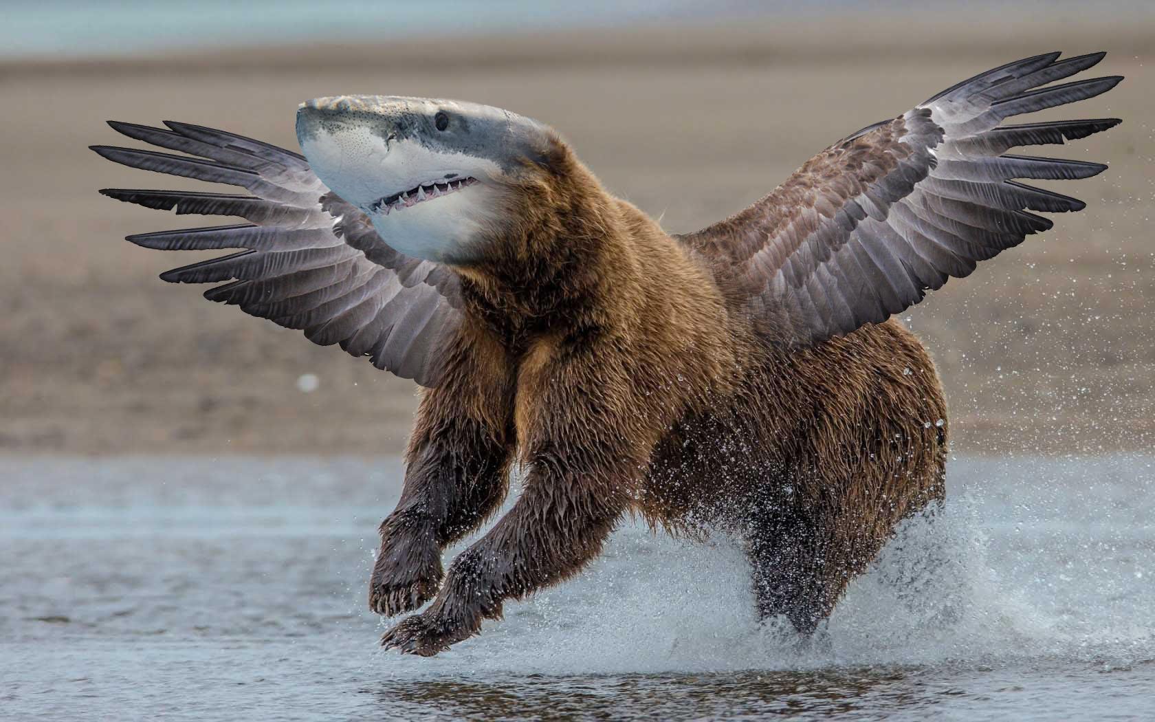 shark bear bird
