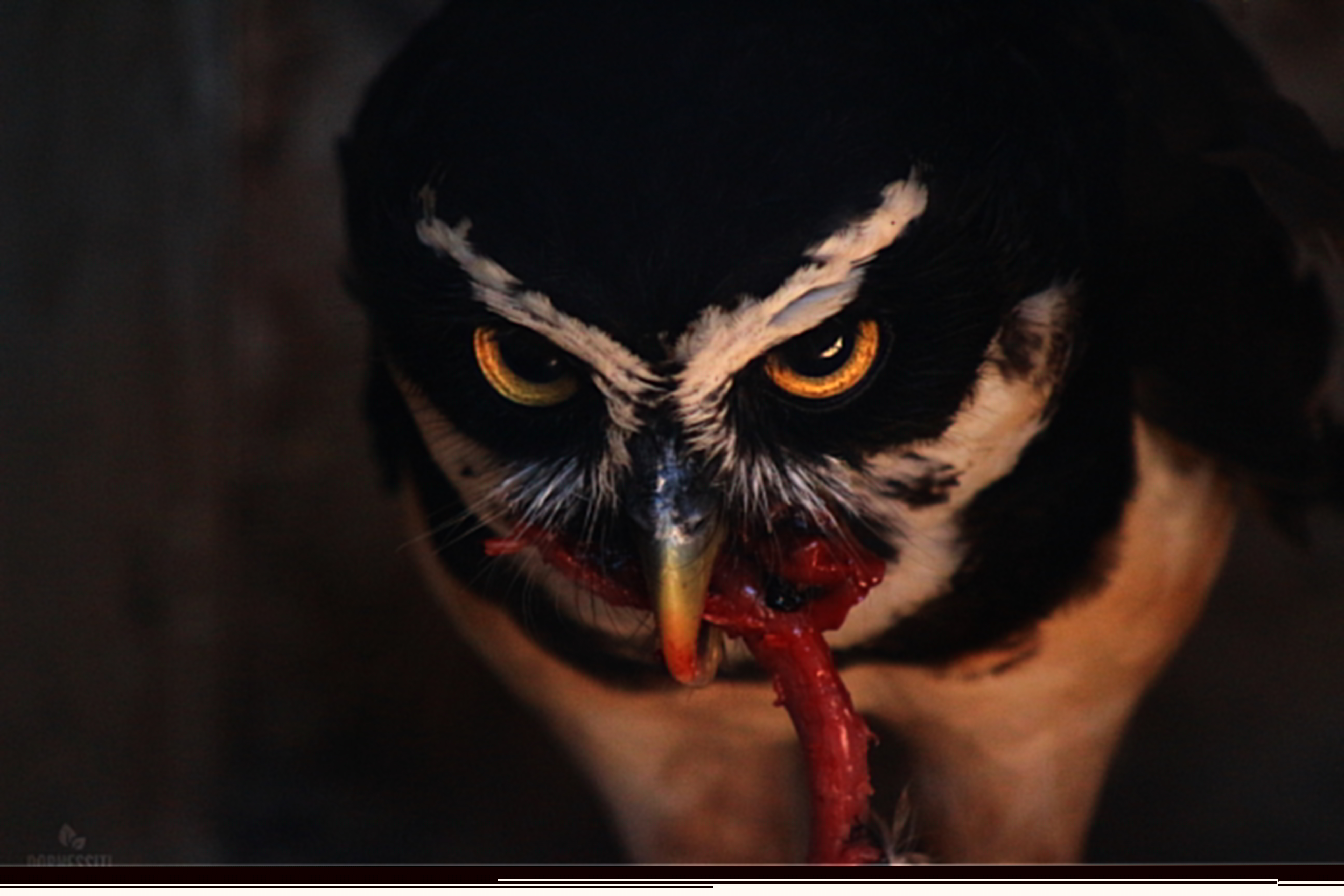 owl eating