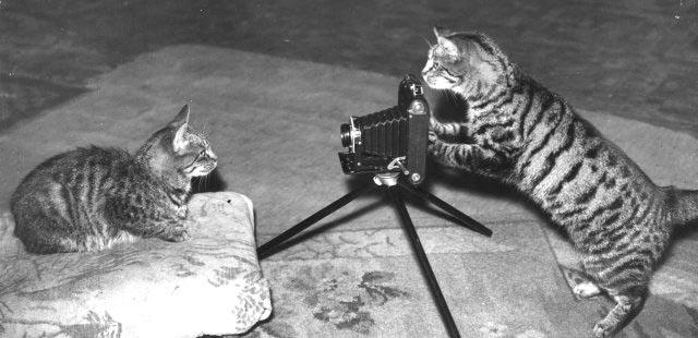 kittens taking pictures of each other