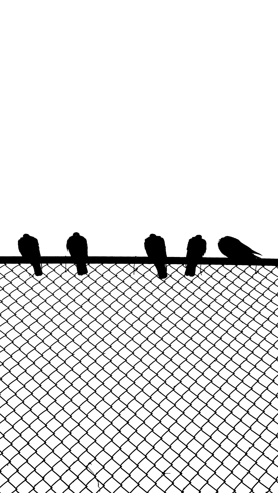 silhoiuette of birds on a fence
